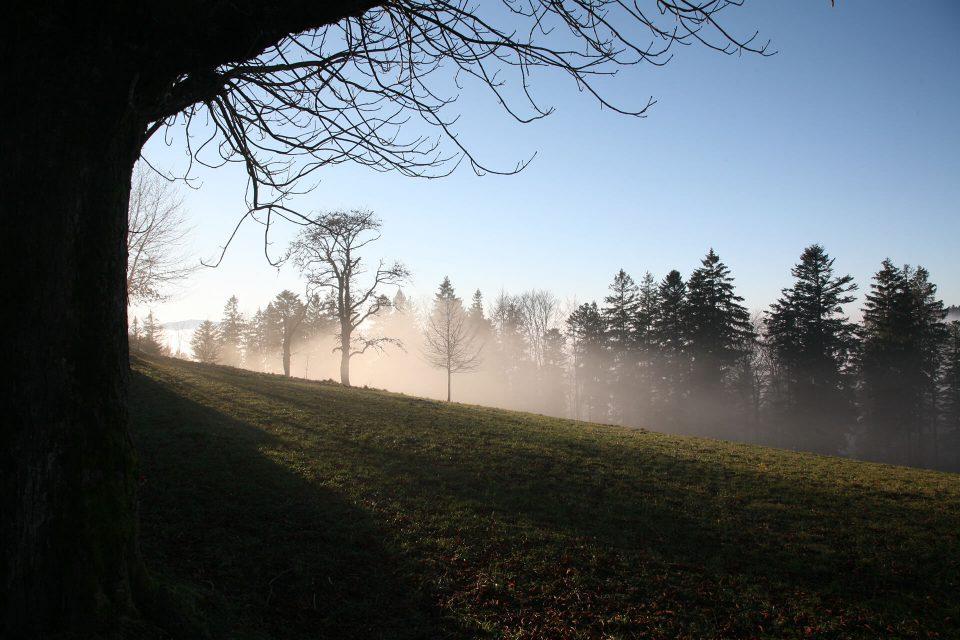 Stimmungsvolles Schwarzwald-Motiv